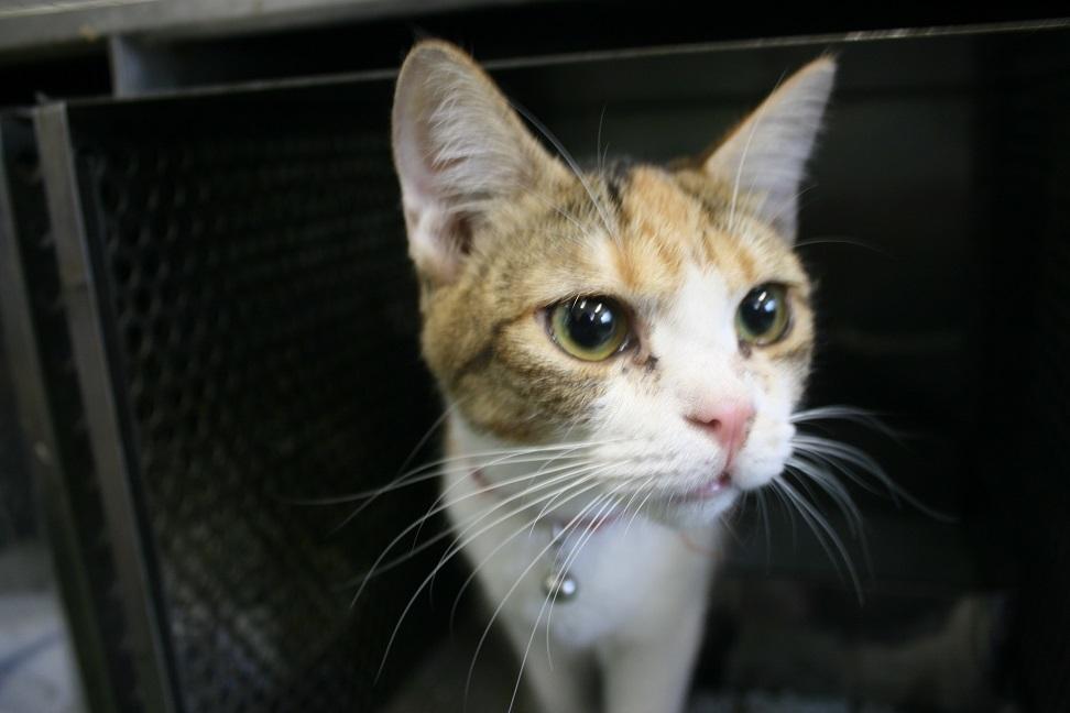 【移動先募集】センター(支所)収容の犬猫(6/17訪問)_f0242002_22293448.jpg