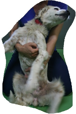 【移動先募集】センター(支所)収容の犬猫(6/17訪問)_f0242002_22322421.jpg