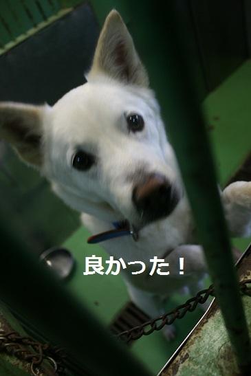 【移動先募集】センター(支所)収容の犬猫(6/17訪問)_f0242002_22332411.jpg