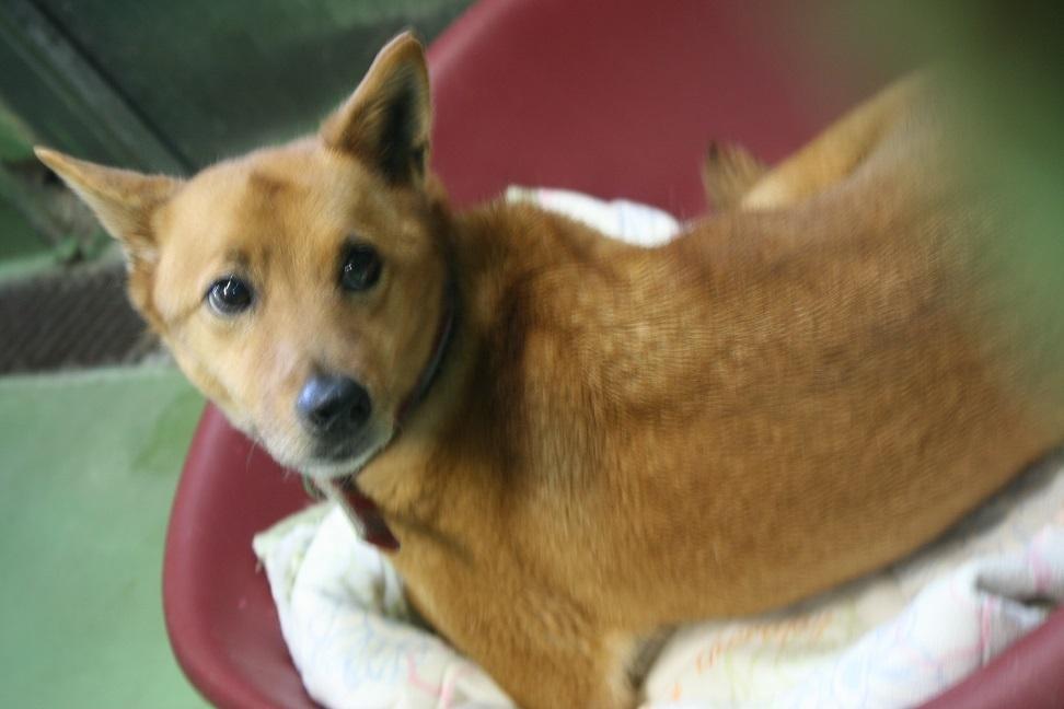 【移動先募集】センター(支所)収容の犬猫(6/17訪問)_f0242002_22340823.jpg