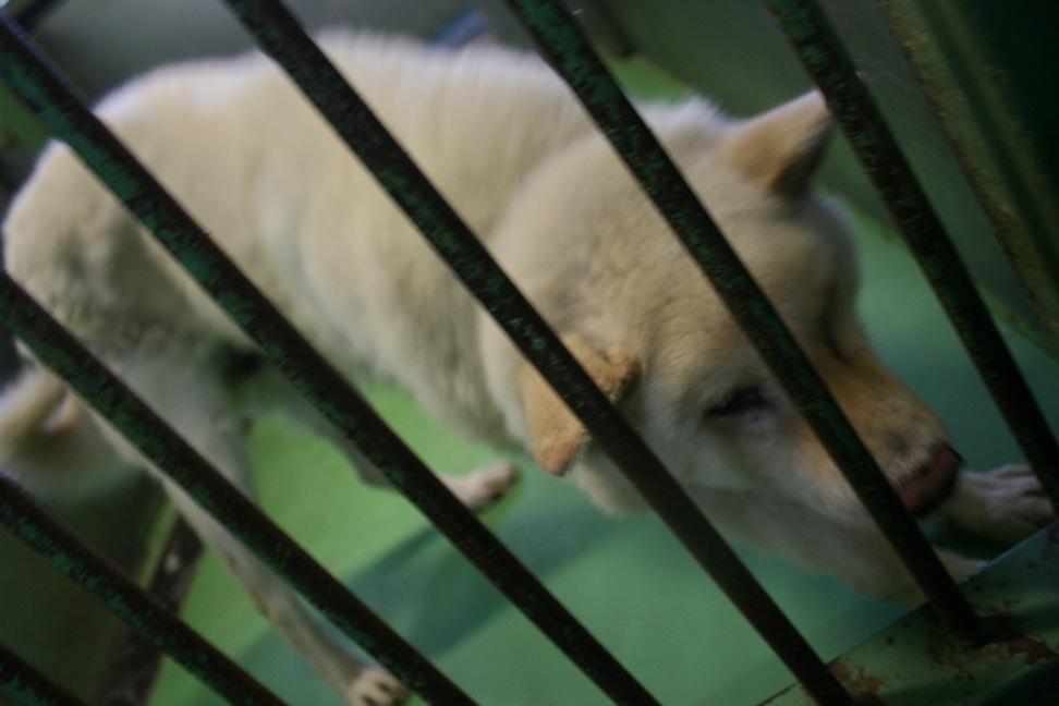 【移動先募集】センター(支所)収容の犬猫(6/17訪問)_f0242002_22360450.jpg