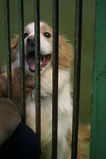 【移動先募集】センター(支所)収容の犬猫(6/17訪問)_f0242002_22370696.jpg