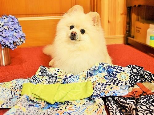 今年の浴衣はどうしよう?_d0360206_01270683.jpg