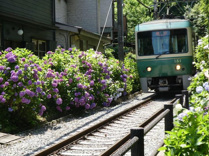 鎌倉の紫陽花_c0051620_630166.jpg