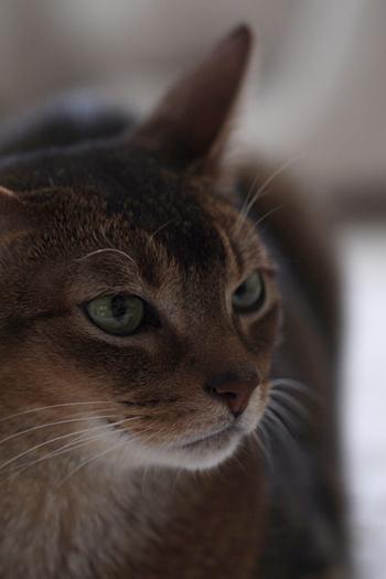 [猫的]今日の一枚_e0090124_23023564.jpg