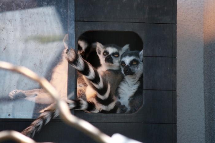【旭山動物園(1)】北海道旅行 - 7 -_f0348831_18362734.jpg
