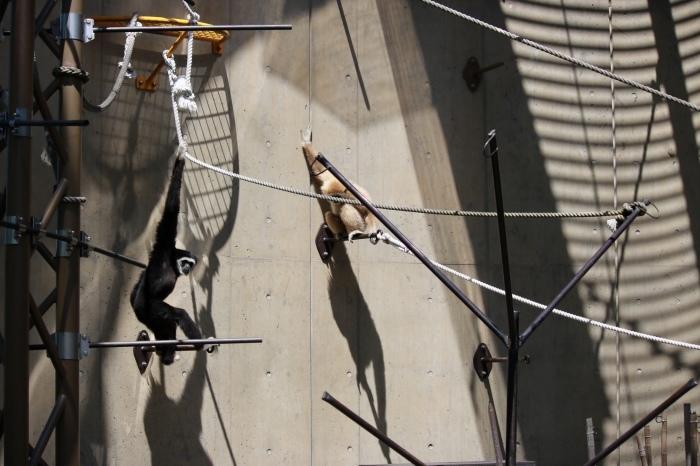 【旭山動物園(1)】北海道旅行 - 7 -_f0348831_18364307.jpg