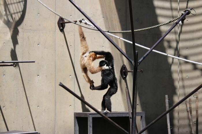 【旭山動物園(1)】北海道旅行 - 7 -_f0348831_18364764.jpg