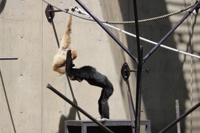 【旭山動物園(1)】北海道旅行 - 7 -_f0348831_18364934.jpg
