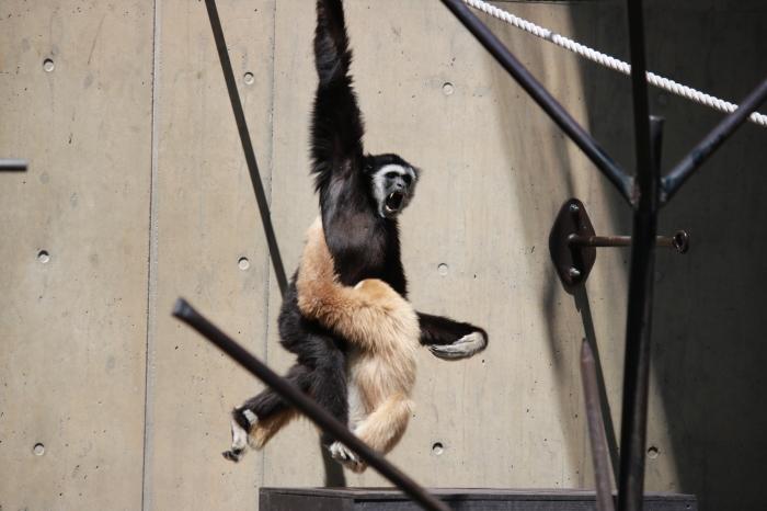 【旭山動物園(1)】北海道旅行 - 7 -_f0348831_18365428.jpg