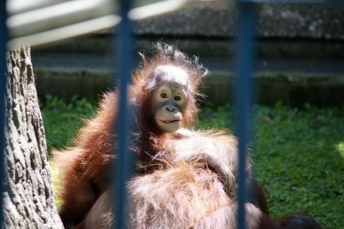 【旭山動物園(1)】北海道旅行 - 7 -_f0348831_18371257.jpg