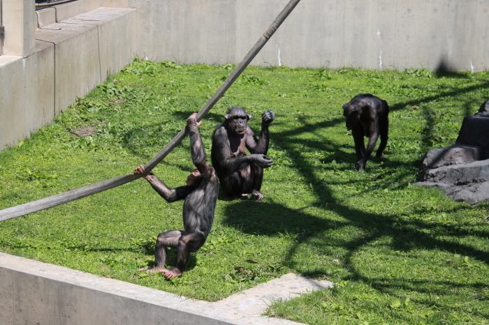 【旭山動物園(1)】北海道旅行 - 7 -_f0348831_18372029.jpg