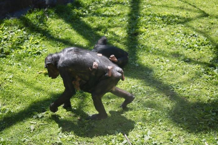 【旭山動物園(1)】北海道旅行 - 7 -_f0348831_18372616.jpg