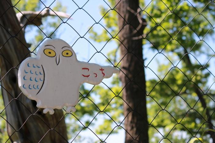 【旭山動物園(2)】北海道旅行 - 8 -_f0348831_20461712.jpg