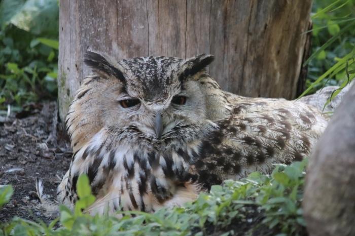 【旭山動物園(2)】北海道旅行 - 8 -_f0348831_20462545.jpg