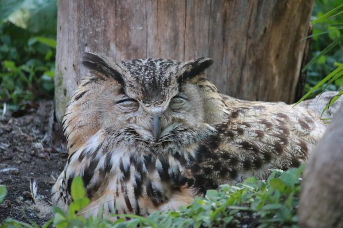 【旭山動物園(2)】北海道旅行 - 8 -_f0348831_20462763.jpg