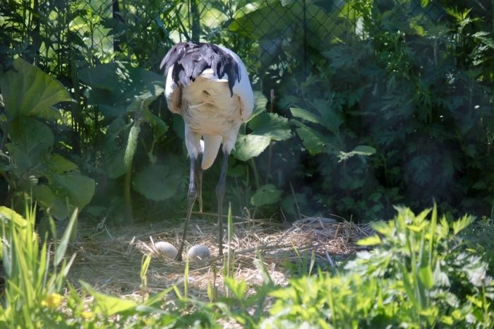 【旭山動物園(2)】北海道旅行 - 8 -_f0348831_20464206.jpg