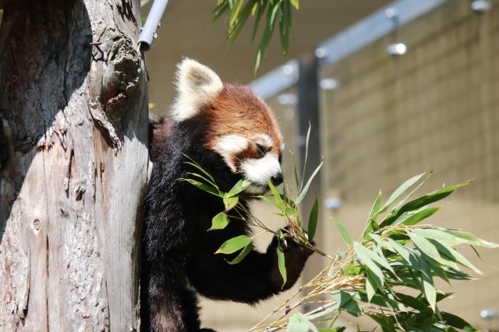【旭山動物園(2)】北海道旅行 - 8 -_f0348831_20465433.jpg