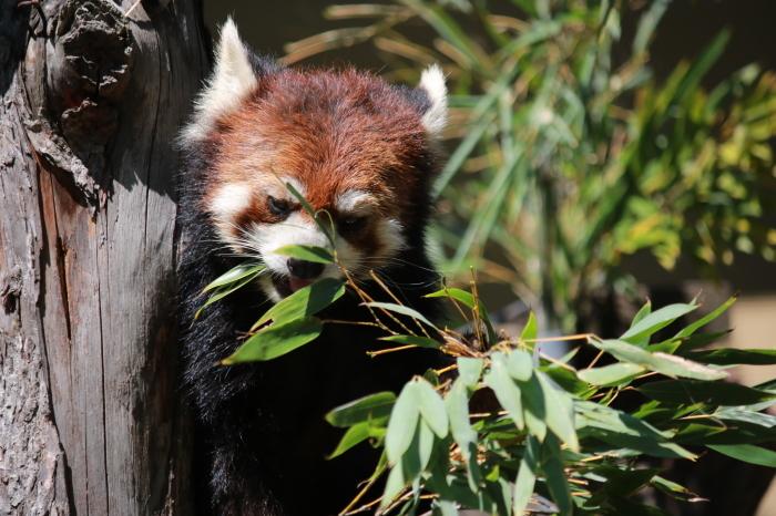【旭山動物園(2)】北海道旅行 - 8 -_f0348831_20465542.jpg