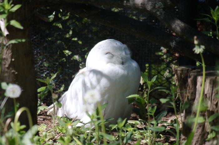 【旭山動物園(2)】北海道旅行 - 8 -_f0348831_20471601.jpg