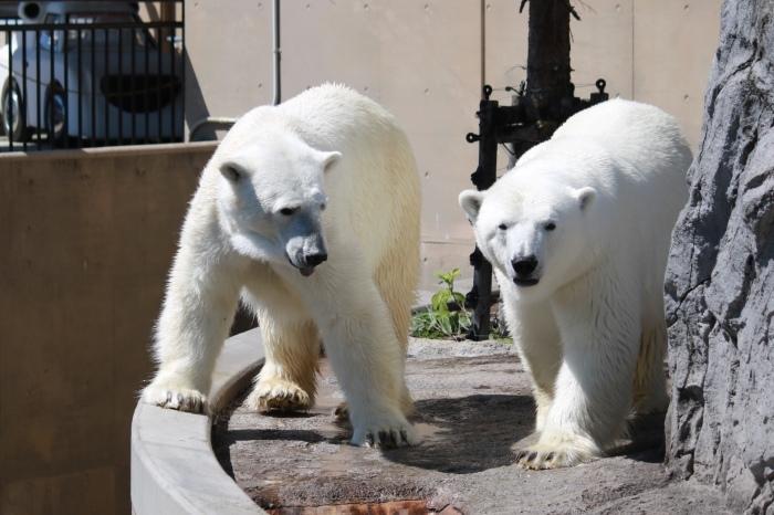 【旭山動物園(2)】北海道旅行 - 8 -_f0348831_20473219.jpg