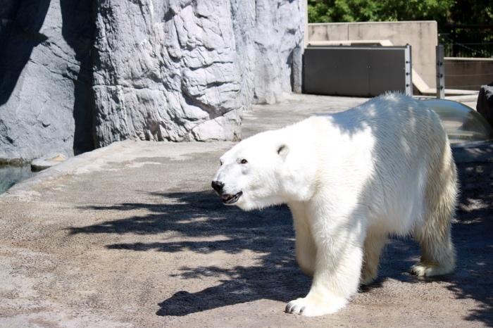 【旭山動物園(2)】北海道旅行 - 8 -_f0348831_20473464.jpg