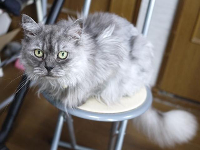 猫のお留守番 チョビくん編。_a0143140_00003565.jpg
