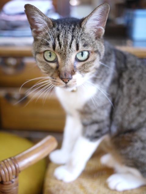 猫のお留守番 メイちゃん編。_a0143140_23180726.jpg