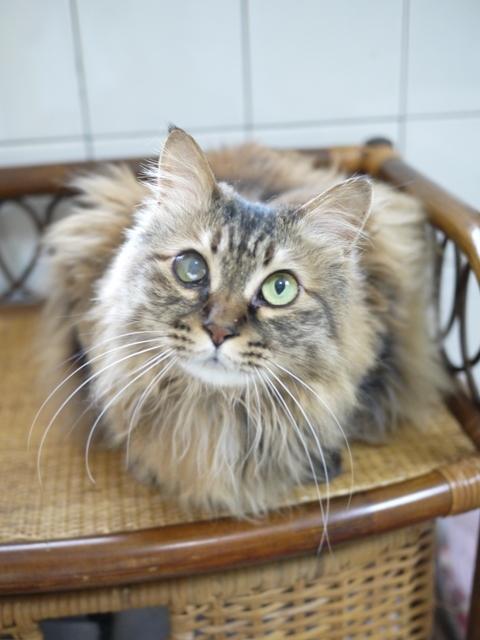 猫のお留守番 ポポちゃん編。_a0143140_23211311.jpg