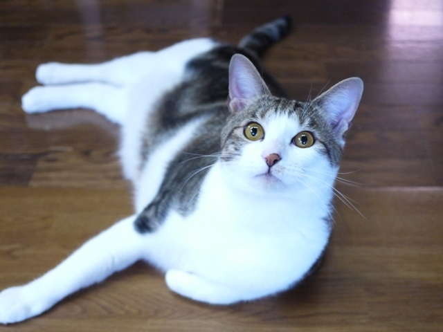 猫のお留守番 ラッキーくん編。_a0143140_23234552.jpg
