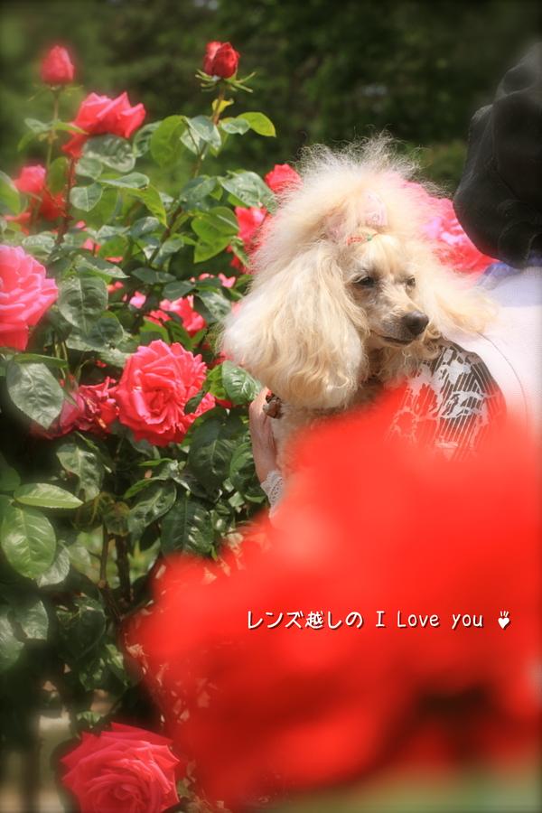 Rose Garden ♪ ~国営ひたち海浜公園~_d0367763_21081322.jpg
