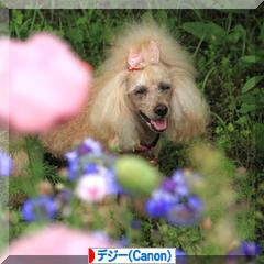 Rose Garden ♪ ~国営ひたち海浜公園~_d0367763_21081756.jpg