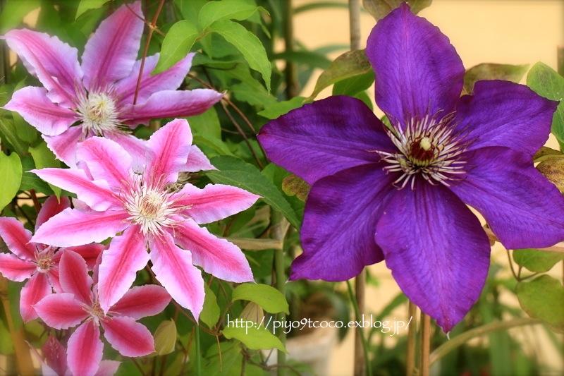 実家のお花など♪_d0367763_21083049.jpg