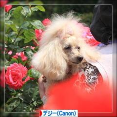 実家のお花など♪_d0367763_21083620.jpg