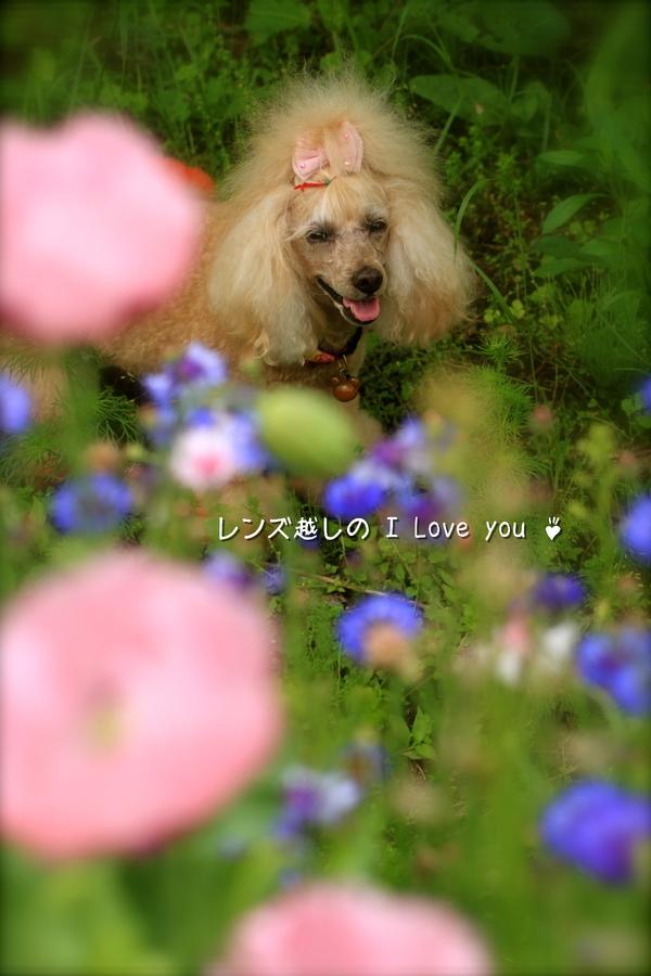 実家のお花など♪_d0367763_21083680.jpg