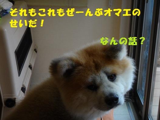 f0121712_22475343.jpg