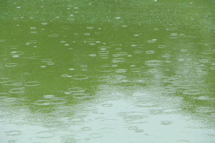 梅雨らしい天気に_d0150720_11313108.jpg