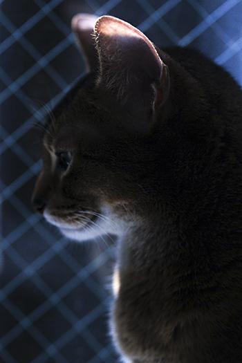 [猫的]今日の一枚_e0090124_22164574.jpg