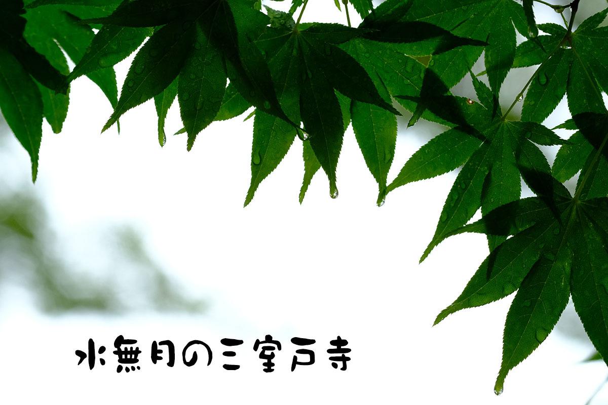 c0211429_20154938.jpg