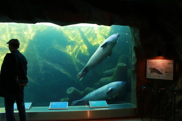 【旭山動物園(3)】北海道旅行 - 9 -_f0348831_20361666.jpg