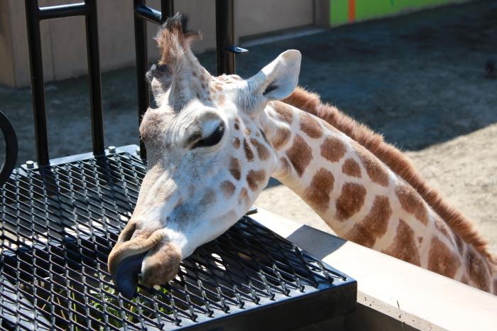 【旭山動物園(3)】北海道旅行 - 9 -_f0348831_20363225.jpg