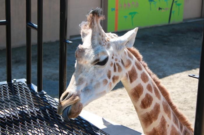 【旭山動物園(3)】北海道旅行 - 9 -_f0348831_20364260.jpg