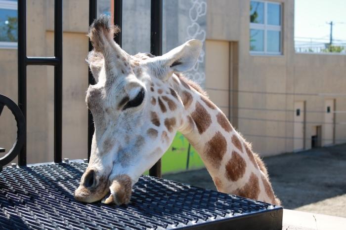 【旭山動物園(3)】北海道旅行 - 9 -_f0348831_20365051.jpg