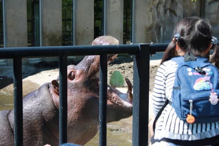 【旭山動物園(3)】北海道旅行 - 9 -_f0348831_20370193.jpg