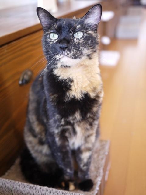 猫のお留守番 ワサビちゃん天ちゃん麦くん茶くん編。_a0143140_17360698.jpg