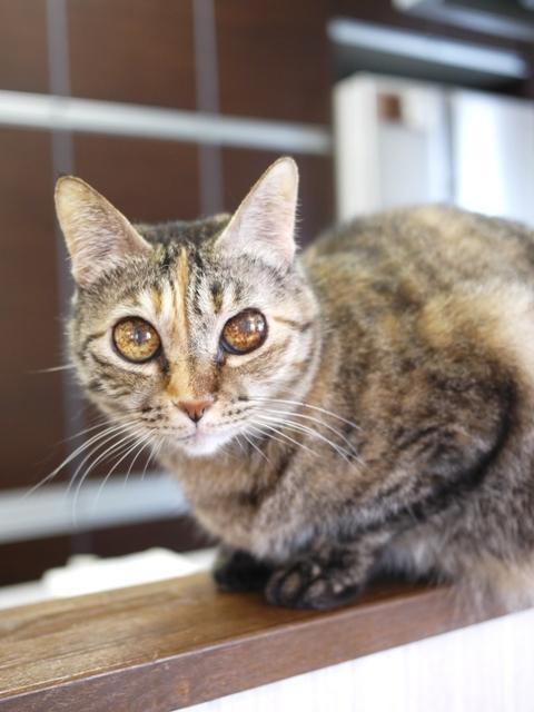 猫のお留守番 ワサビちゃん天ちゃん麦くん茶くん編。_a0143140_17363024.jpg
