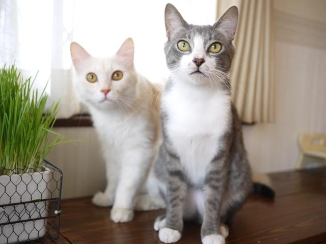 猫のお留守番 ワサビちゃん天ちゃん麦くん茶くん編。_a0143140_17364436.jpg