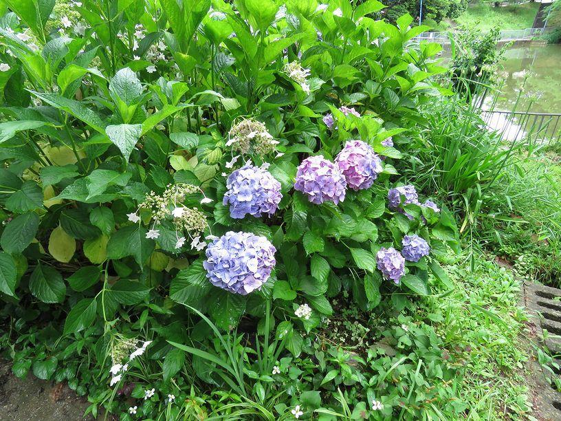 6月21日(雨後曇)タイトル:ホシミスジ_f0105542_11413927.jpg