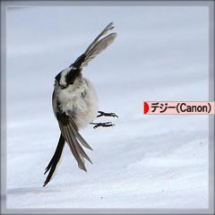雪*エナガしゃん♪_d0367763_17551266.jpg