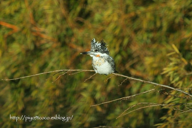 今年初撮りの鳥さんは♪_d0367763_20253365.jpg